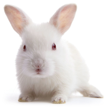 Cruelty free cosmetics and skincare
